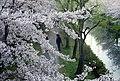 Fushimi Ward, Kyoto, Kyoto Prefecture, Japan - panoramio (3).jpg