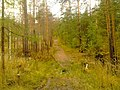 G. Novouralsk, Sverdlovskaya oblast', Russia - panoramio (151).jpg