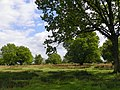 GOC The Pelhams 082 Patmore Heath Nature Reserve, Albury (28201004331).jpg