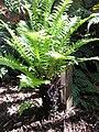 Gardenology.org-IMG 0826 rbgs10dec.jpg