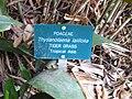 Gardenology.org-IMG 2464 ucla09.jpg