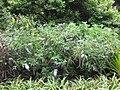 Gardenology.org-IMG 2548 rbgs11jan.jpg