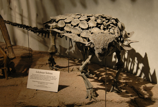 <i>Gargoyleosaurus</i> genus of reptiles (fossil)
