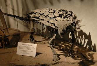 Kimmeridgian - Gargoyleosaurus skeleton