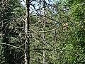 Geibeltbad Pirna Rottwerndorfer Str 56 5.JPG