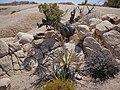 Geologic formations at Skull Rock (28998389891).jpg