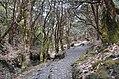 Ghorepaani Ghandruk Trail 2.jpg