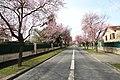 Gif-sur-Yvette - Avenue du Général Leclerc - le 27 mars 2015 - 3.jpg