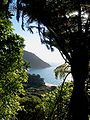 Golden Bay Forest.jpg