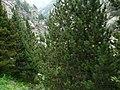 Gorges de Núria des del cremallera P1030250.JPG
