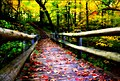 Grant park in the fall - milwaukee.jpg