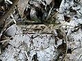 Grasshopper (3976822254).jpg