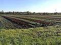 Green Infrastructure vegetable cultivation Munich LOS DAMA!.jpg