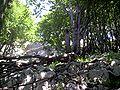 Green karst, NP Risnjak, Croatia.jpg