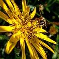 Grenchen - Bee.jpg