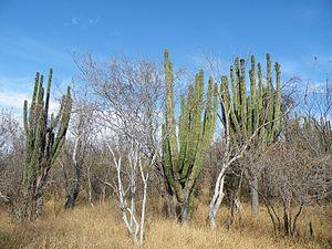 Climate of Mexico - Image: Guamuchil, Sinaloa (5768649853)