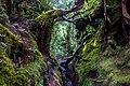 Gunung Irau (The Mossy Forest) (25582835723).jpg