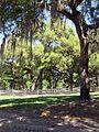 Gypsy Gold Farm, Ocala, FL 1.jpg