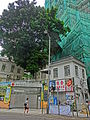 HK Mid-Levels Pokfulam Road tree High Street April 2013.JPG