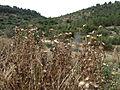 Hadassah Trail P1150438.JPG