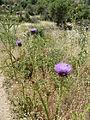 Hadassah Trail P1150453.JPG
