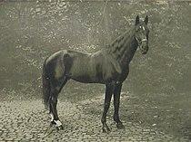 Hans 1910.jpg