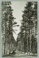Harjutie, Harjutien korkea osa, Tarkemmin määrittelemätön paikka, Th. Sunell 1920s–1930s PK0124.jpg