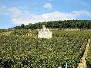 Terroir - While the concept of terroir is not specific to Burgundy, the examples of Burgundy wine from places like the Chablis premier cru Fourchaume are very terroir driven.