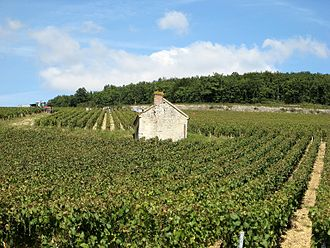 Burgundy wine - Harvest time in the Chablis Premier Cru of Fourchaume