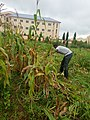 Harvest time is.jpg