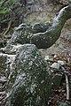 Harz Linde über Ruinenreste der Lauenburg - panoramio (2).jpg