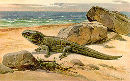 Tuatara por Heinrich Harder, ca 1916
