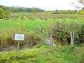 Hayles Fruit Farm - geograph.org.uk - 1550453.jpg