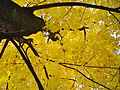 Herbstbaum.jpg