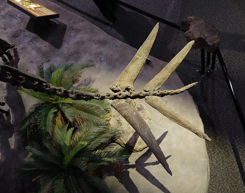 Hesperosaurus Thagomizer Museum of Anchient Life