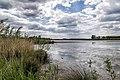 Het Laarzenpad 06 Biesbosch, Dordrecht (34534313146).jpg