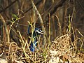 Hiding Away - PC -Kabini.jpg
