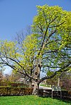 High Park, Toronto DSC 0244 (17393576705).jpg