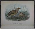 History of the birds of NZ 1st ed p160-2.jpg
