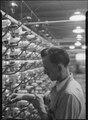 Holyoke, Massachusetts - Silk. William Skinner and Sons. Rayon warping - cone creel. - NARA - 518319.tif