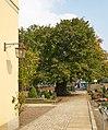 Horner Kirche - Linde jh.jpg