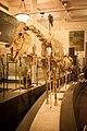 Horse skeleton AMNH.jpg