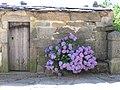 Hortensias en Prada - panoramio.jpg