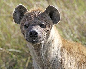 Dog Bite Australia