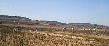 IMG Vignoble de Beaune 1.JPG