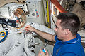ISS-36 Chris Cassidy works with a spacesuit in the Quest airlock.jpg