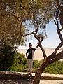 Ichkeul national park tunisia 16.JPG
