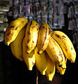 India - Colours of India - Bananas 1 (2357421566).jpg