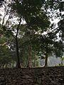 Indian Botanic Garden - Howrah 2012-01-29 1675.JPG