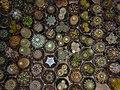 "Iran-qom-Cactus-The greenhouse of the thorn world گلخانه کاکتوس ""دنیای خار"" در روستای مبارک آباد قم- ایران 32.jpg"